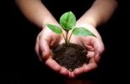 """""""Засади здравје! Засади здрава иднина!"""" е мотото на есенската акција """" Ден на дрвото"""""""