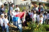 """Во Пехчево одбележан ,, Светскиот ден без автомобили """" и акцијата ,, Засади дрво за мир """""""