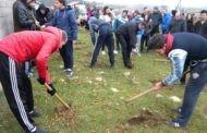 """Акцијата ,, Ден на дрвото """" спроведена успешно во Пехчево"""