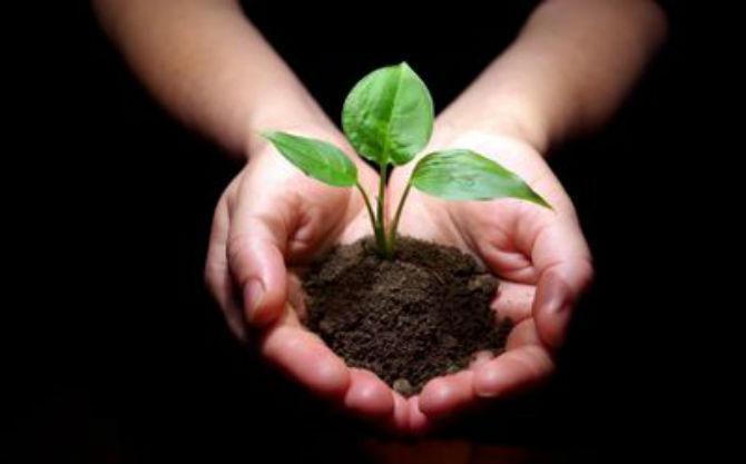 сади-дрво